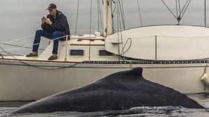 Photographer Eric Smith captured a man off the coast of Redondo Beach, California, engrossed in his phone, while a humpback whale casually lounged just feet from his boat.
