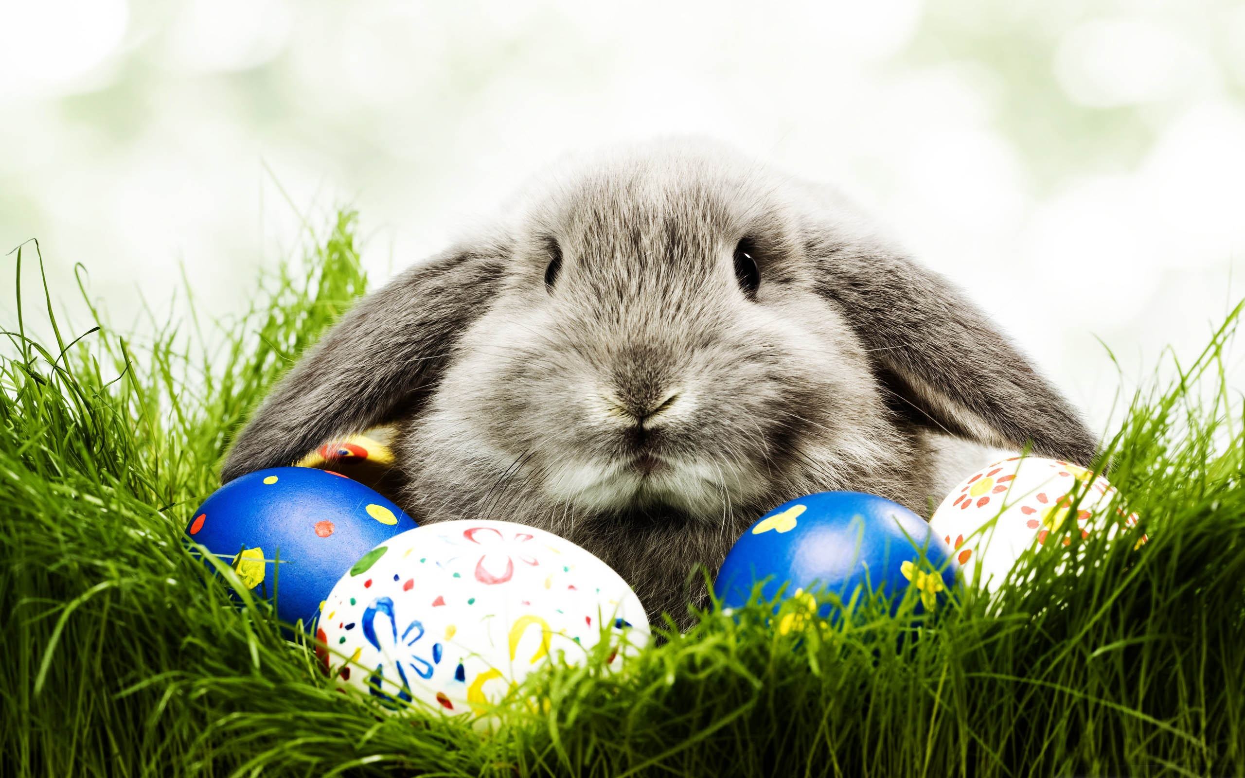 The very strange history of the Easter Bunny | Cosmoso