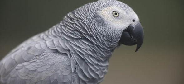 parrot-631628[1]